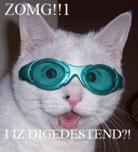 ZOMG Cat